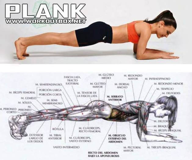 Plank Workout - Sixpack Exercise Healthy Fitness Ab Crunch Situp