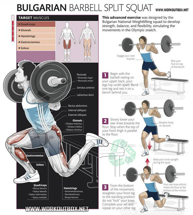 Bulgarian Barbell Split Squat - Healthy Fitness Exercise Squats