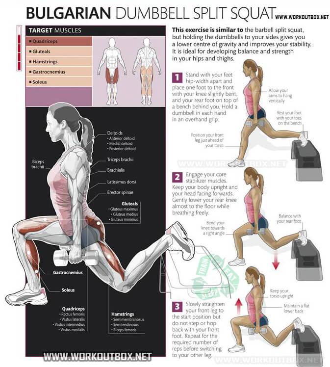 Bulgarian Dumbbell Split Squat - Healthy Fitness Exercise Squats