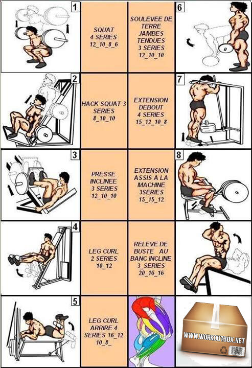 Leg Workout - Healthy Fitness Exercise Squat Curl Calf Butt Abs