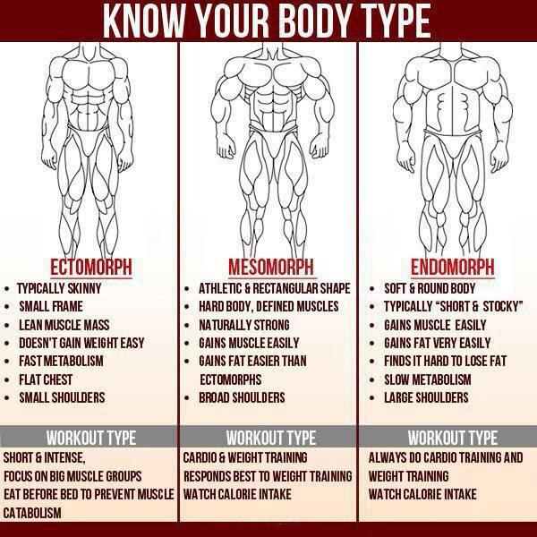 Know Your Body Type - Ectomorph Mesomorph Endomorph Athletic Abs
