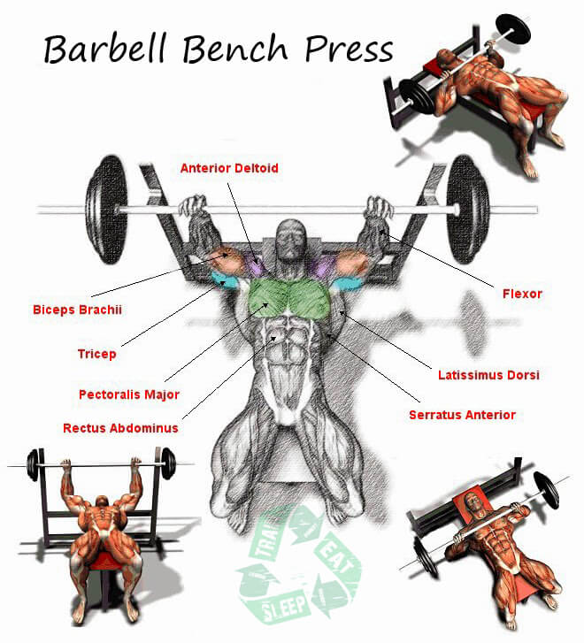 Barbell Bench Press - Chest Workout Triceps Biceps Shoulder Abs