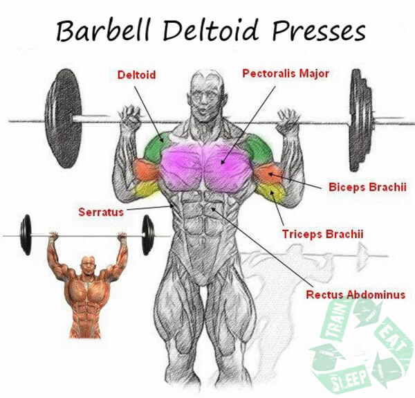 Standing Barbell Deltoid Presses Behind Head - Shoulder Workout