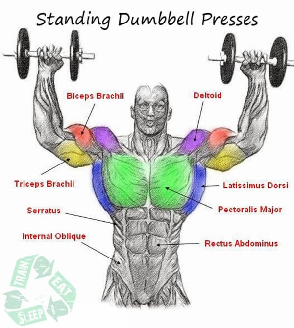 Standing Two Arm Dumbbell Presses - Shoulder Workout Upper Body