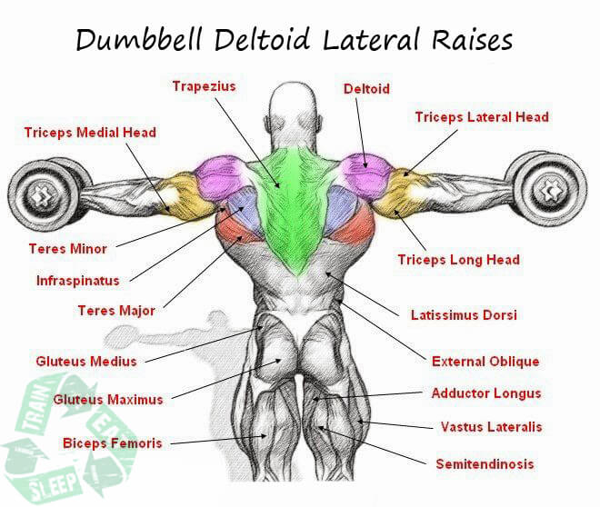 Dumbbell Deltoid Lateral Raises - Shoulder Workout Upper Body Ab