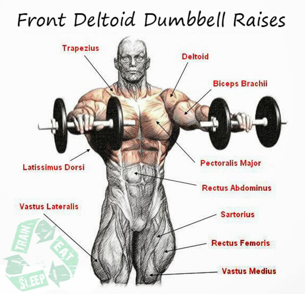 Two Arm Front Deltoid Dumbbell Raises - Shoulder Workout Upper