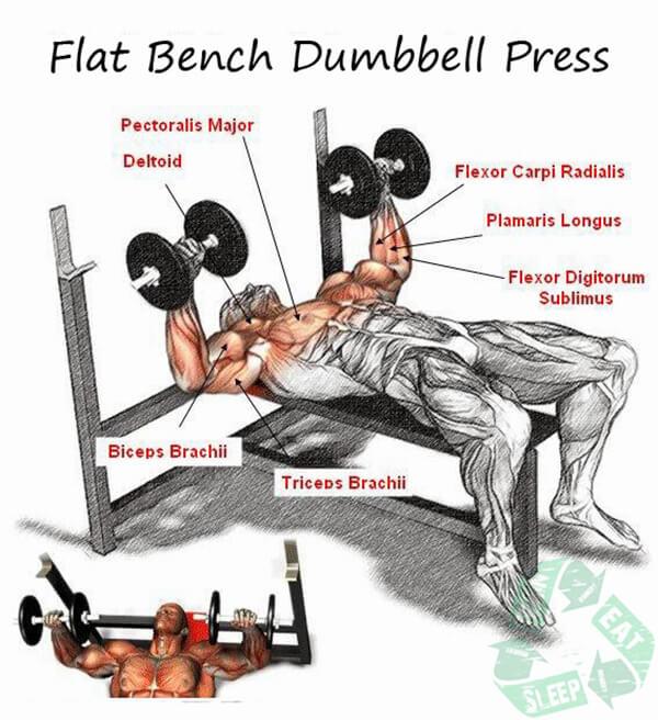 Flat Bench Dumbbell Press - Chest Workout Triceps Bicep Shoulder
