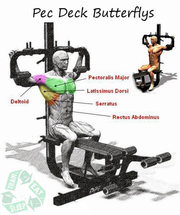 Pec Deck Butterflys - Chest Workout Shoulders Back Arms Upper Ab