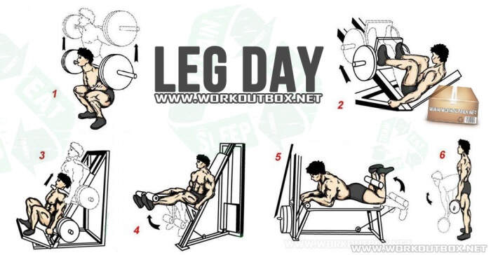 Leg Day - Healthy Fitness Workout Butt Calves Legs Training Core