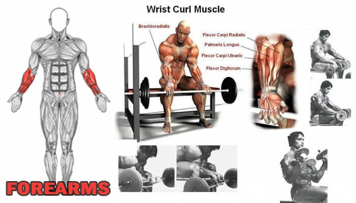Forearms: Wrist Curl Muscle - Healthy Fitness Workout Tips Bicep