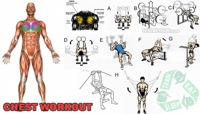 Chest Workout - Healthy Fitness Training Chest Arms Biceps Abs