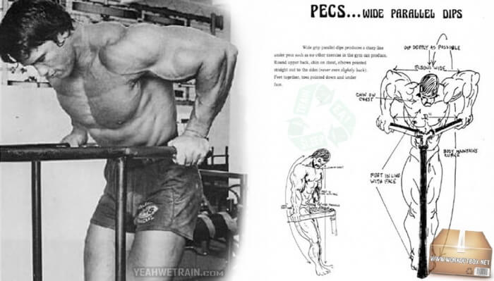 Pecs Wide Parallel Dips - Big Arms Workout Triceps Arnold Fit Ab