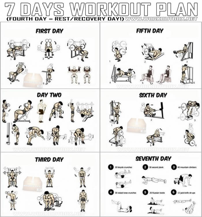 7 Days Workout Plan - Full Body Fitness Training Leg Arm Back Ab