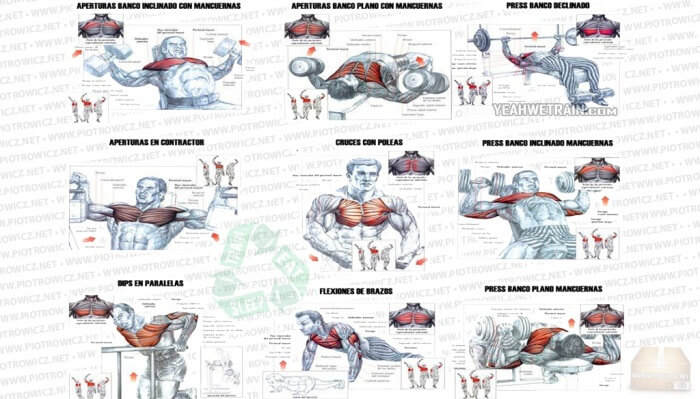 Hardcore Chest Workout - Fitness Exercises Upper Body Arms Core