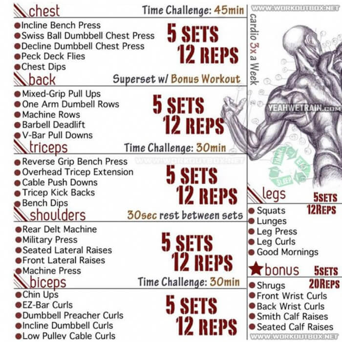 Full Body Workout - Fitness Healthy Training Legs Chest Sixpack