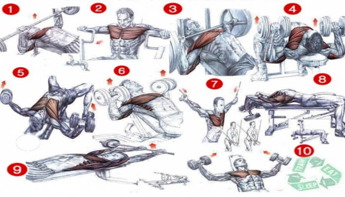 Chest Workout Chart - Best Fitness Workout Healthy Body Fit Ab