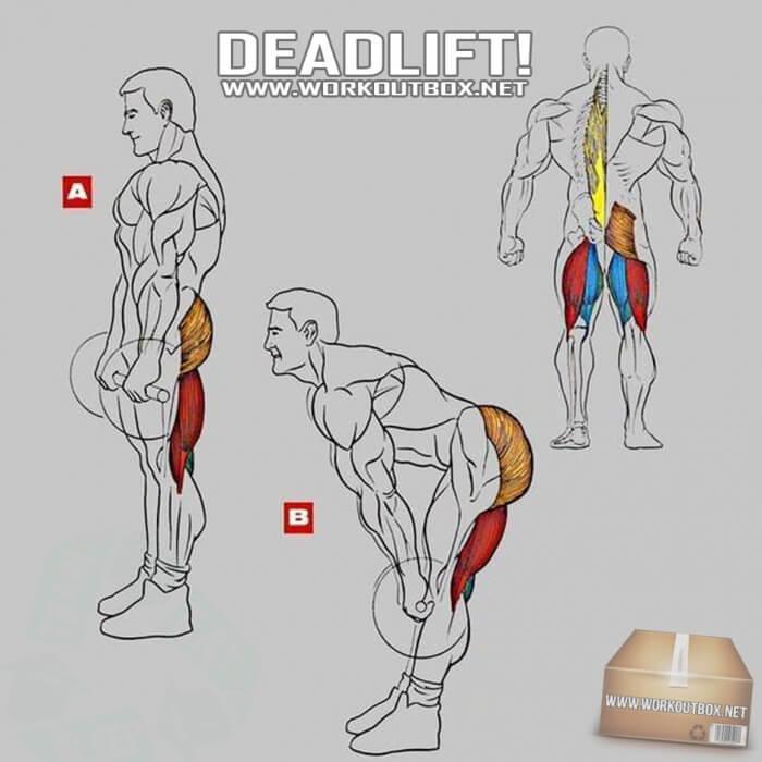 Deadlift - Exercise For Low Back Butt Legs Core Profi Training