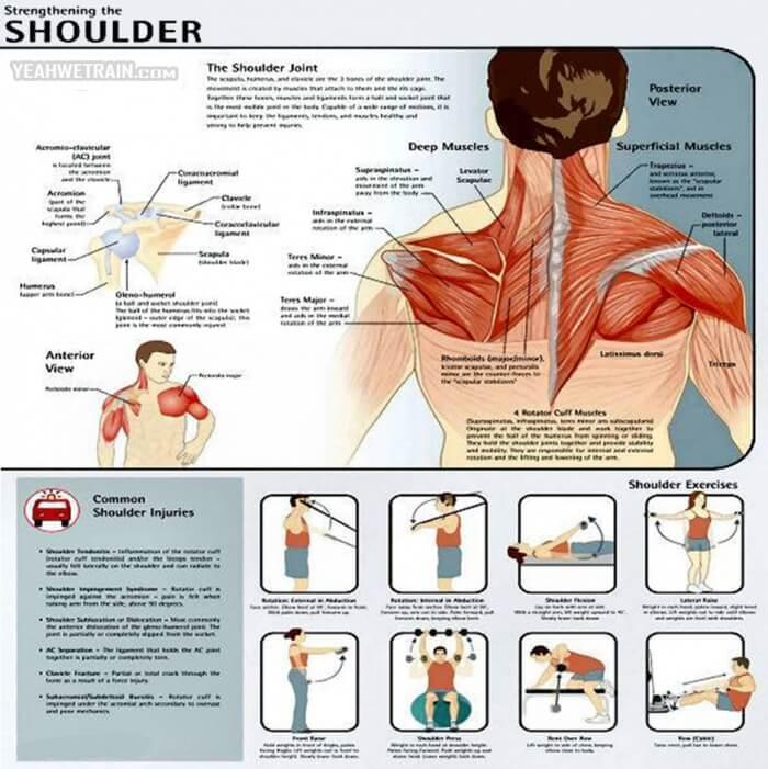 Strengthening The Shoulder ! Shoulder Injuries Fitness Workout