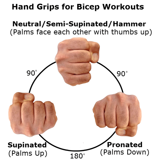 Hand Grips For Bicep Workouts - Neutral Semi-Supinated Hammer Ab
