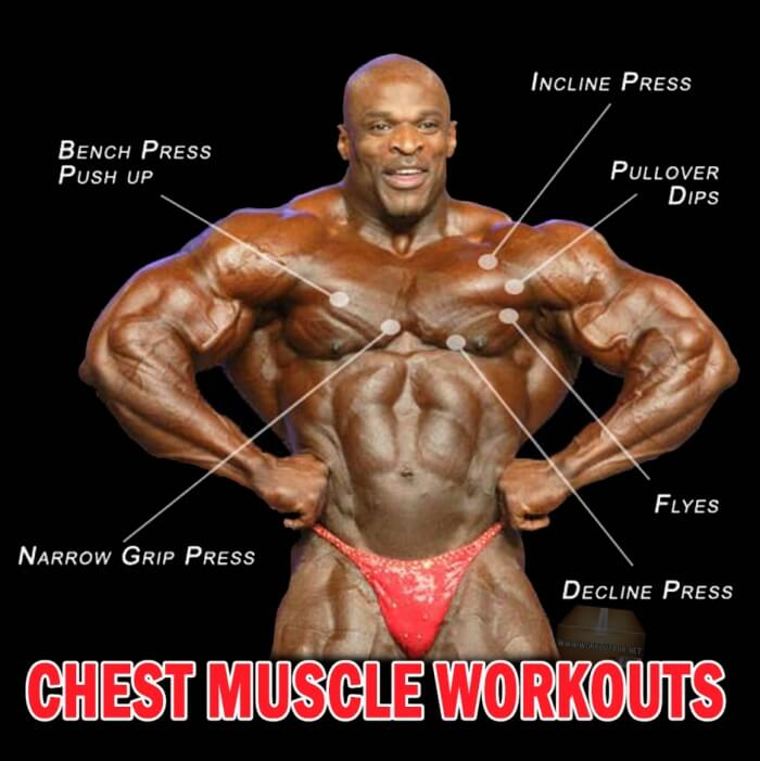 Chest Muscle Workouts - You Should Train Every Part Of The Chest