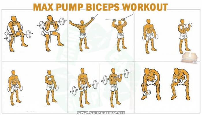 Max Pump Biceps Workout - Healthy Training Arms Triceps Forarms