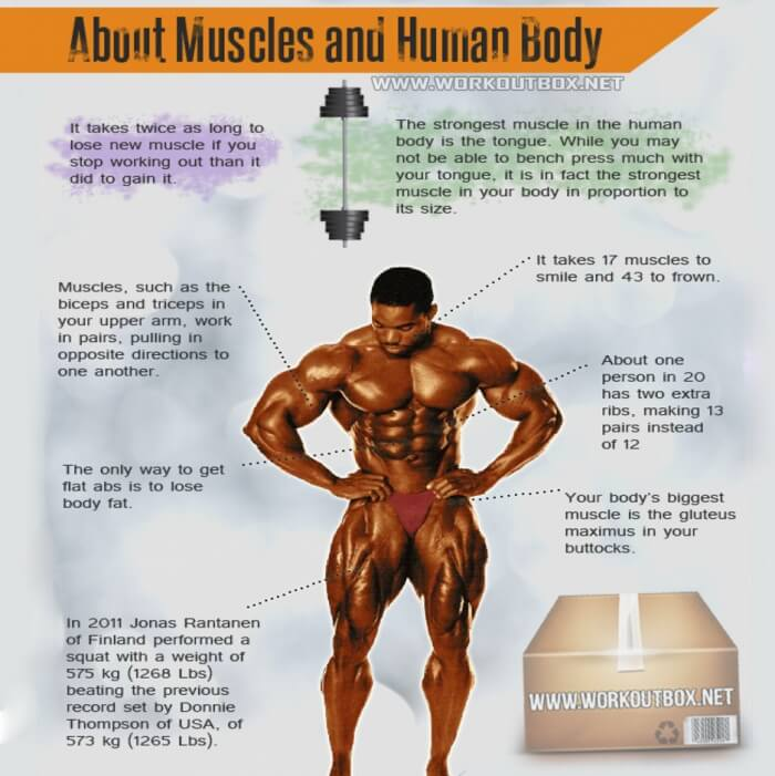 about muscles and human body - interesting fitness facts workout, Muscles