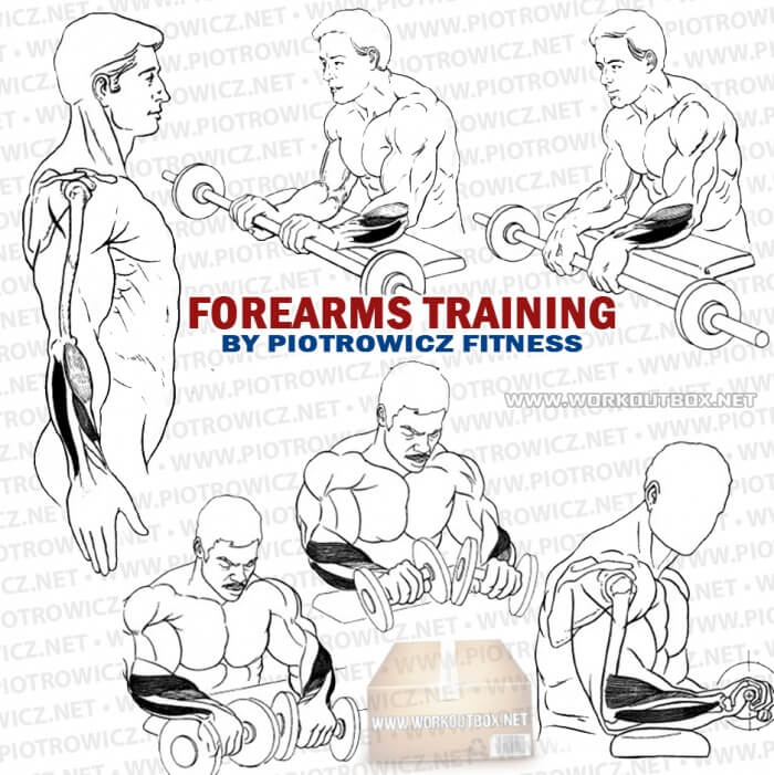 Forearms Training - Train Your Arms For More Grips Biceps Tricep