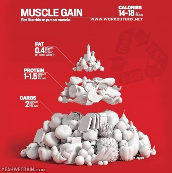 Muscle Gain ! Eat Like This To Put On Muscle - What Do You think