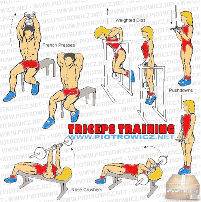 Triceps Training - Hardcore Arm Exercises And Workout Routines A