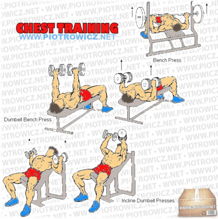 Chest Training - Hardcore Core Exercises And Workout Routine Arm