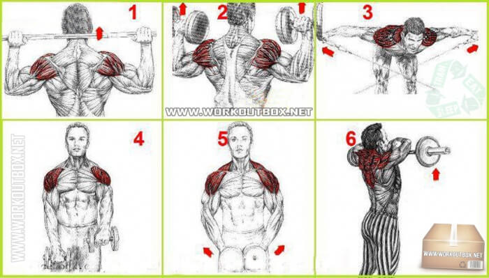 Best Shoulders And Neck Exercises - Hardcore Workout Training Ab