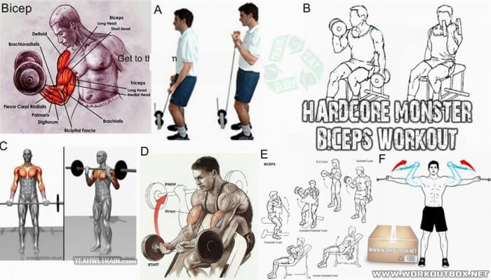 Hardcore Monster Biceps Workout - Best Fitness Exercises Arms Ab