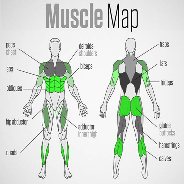 Full Body Muscle Map - Healthy Fitness Trainings Plan Sixpack Ab