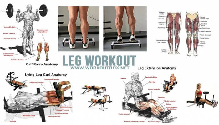 Leg Workout - Healthy Fitness Legs Training Calves Butt Lower Ab