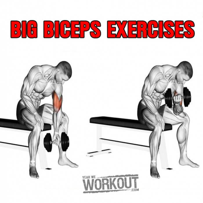Big Biceps Exercises - Healthy Arm Training Plan Bicep Tricep Ab