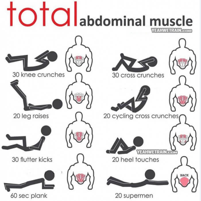 Total Abdominal Muscle - Healthy Fitness Abs Training Plan Core